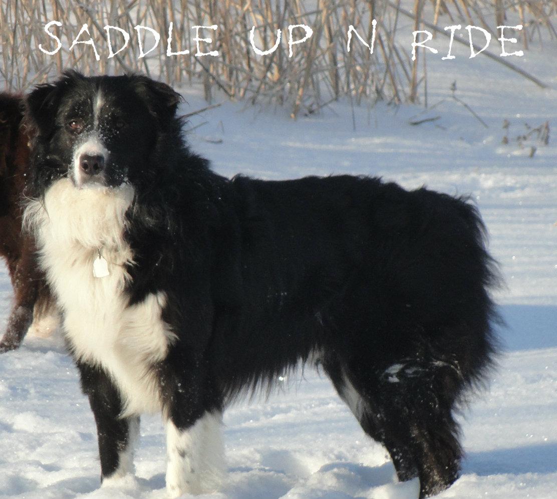 Saddle Up N Ride